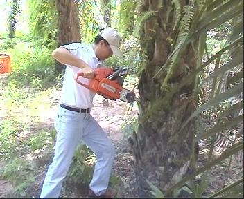 Oil Palm Trunk Injection Fertilizer